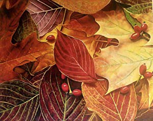 Leaf Dance, copyright © Jeanie Bates
