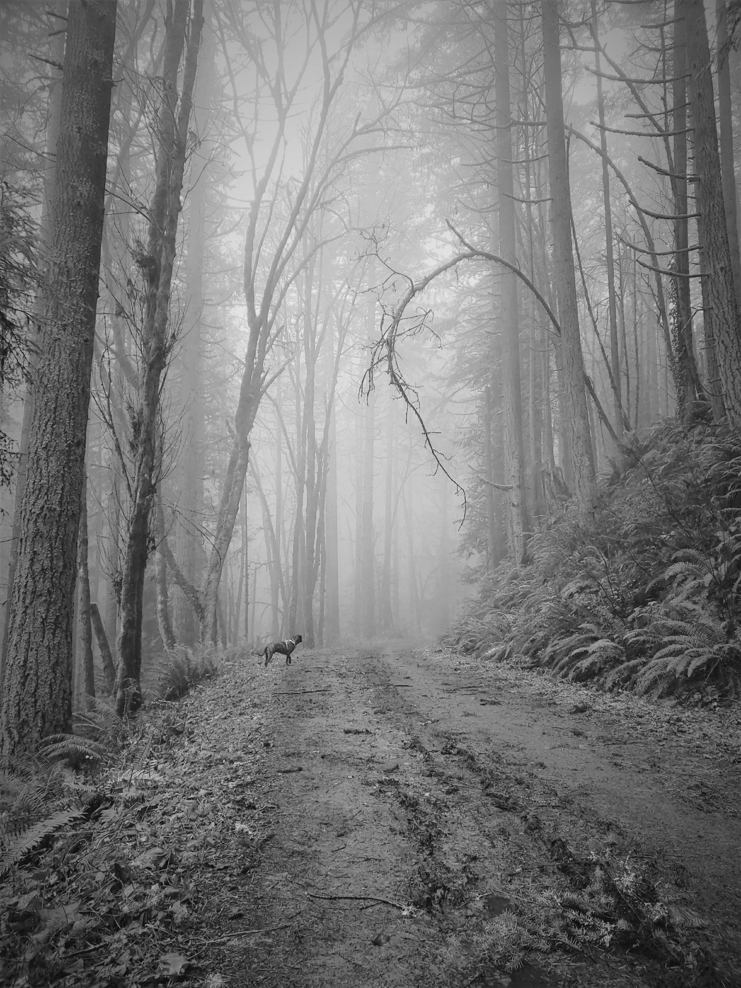 Winter Walk, copyright © Rebekah Skye