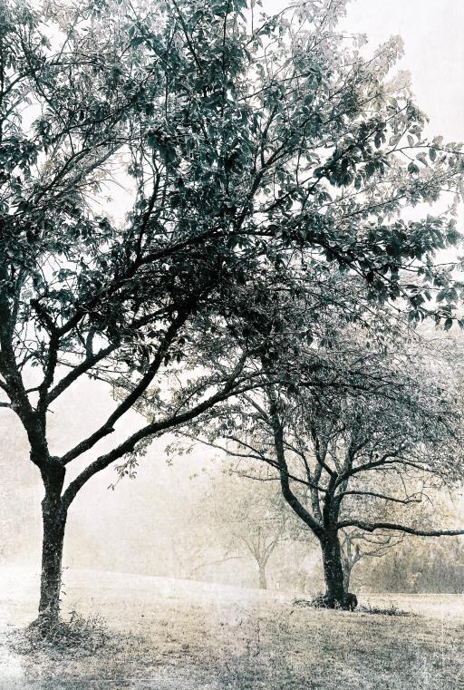 Tree Dance, copyright © Jane Wolfsehr