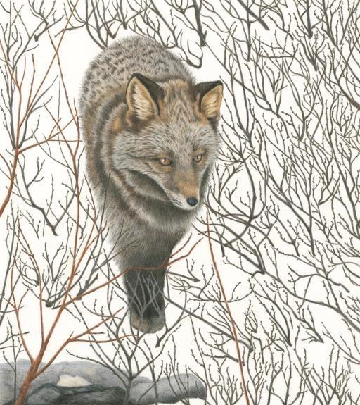 Through the Willows, copyright © Terri Neal