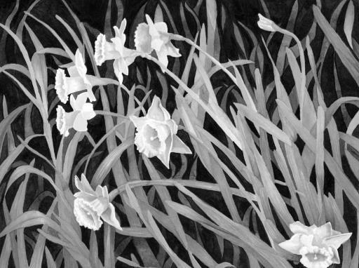 Daffodils, copyright © Rosalind Kane