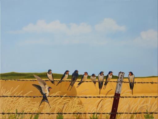Barn Swallow, copyright © Dennis Mayers