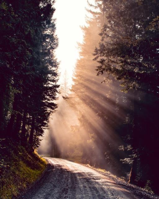 Forest Awakening, copyright © Derick Black