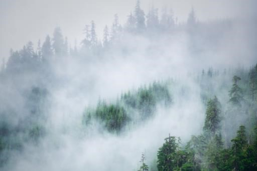 Mists, copyright © Erin Moomey