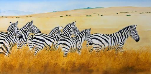 Six Zebras, copyright © Dennis Mayers