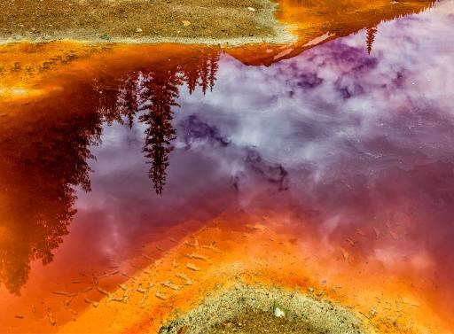 Puddle Reflection, copyright © Don Jacobson
