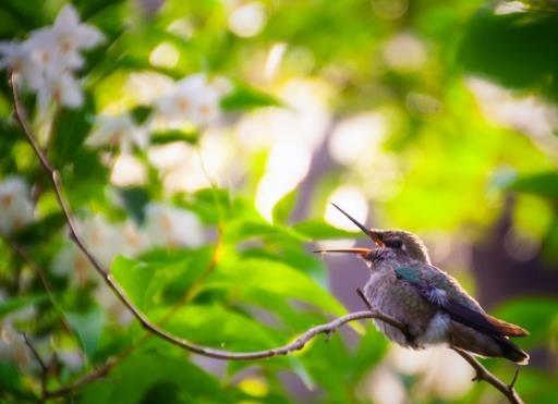 Hummingbird feast, copyright © Erin Moomey