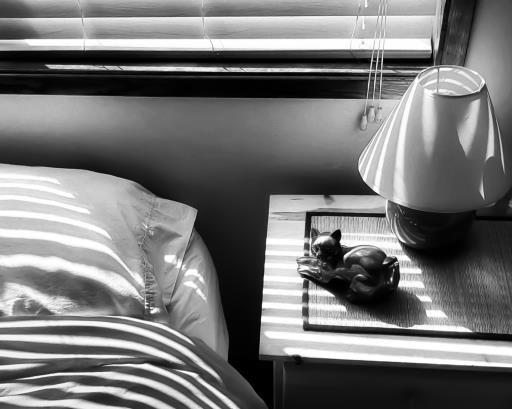 Meow, copyright © Rebecca Benoit